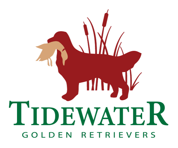Tidewater Golden Retrievers