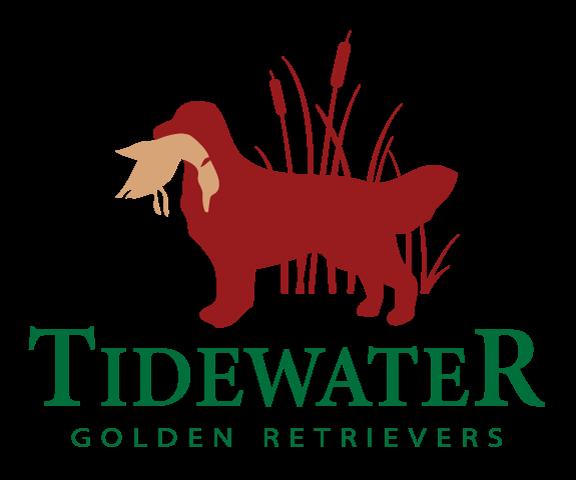 Tidewater Golden Retrievers