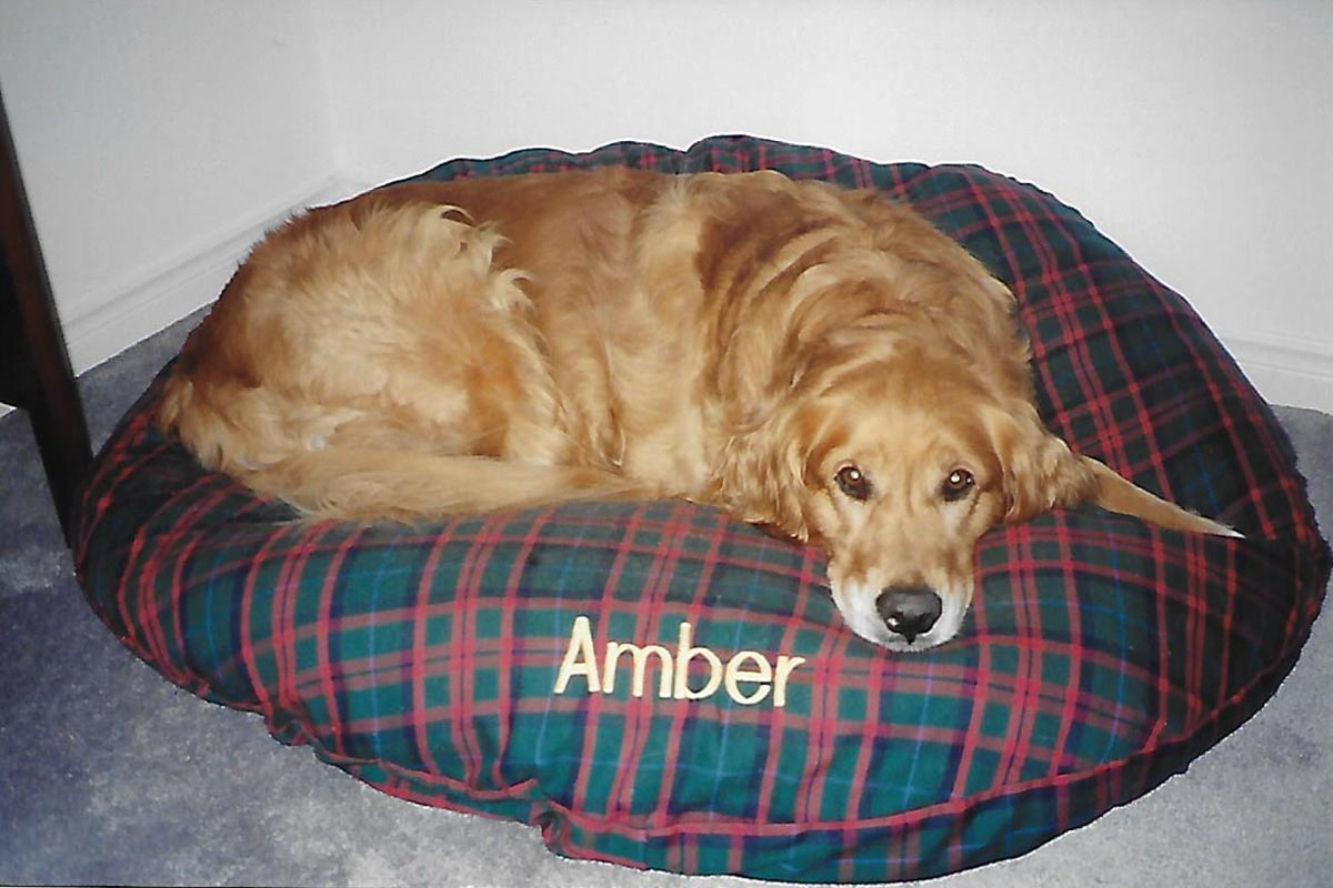 Amber in her bed