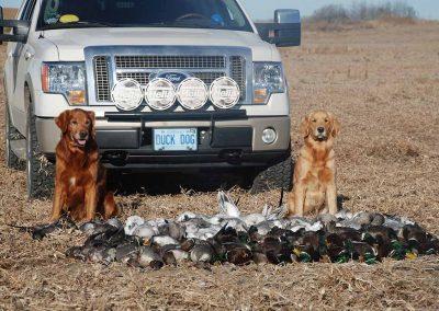 Bree Duck Dogs