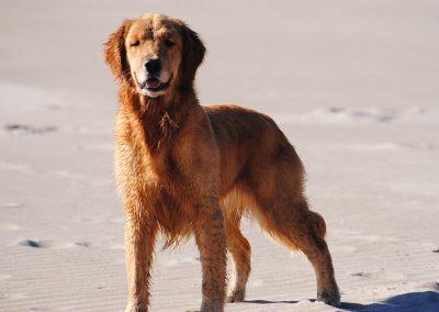 Bree on beach