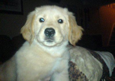 Bree as a puppy
