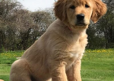 Gypsy Puppy Outside May 2019