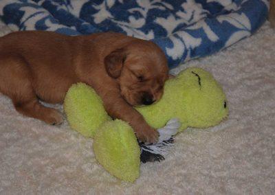 Puppy Sleeping July 2016
