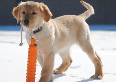 Reba puppy