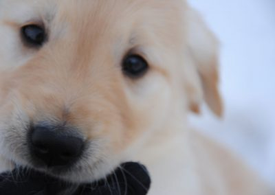 Reba puppy closeup