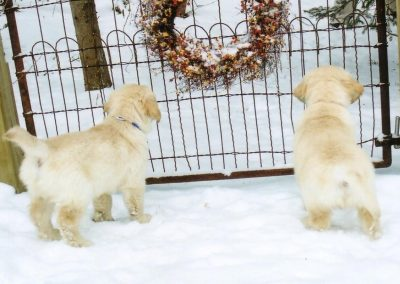 Rowan and his brother in the snow as puppies