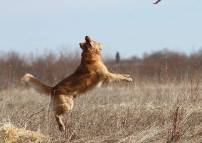 Rowan leaping