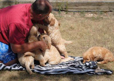 Five puppies 2016