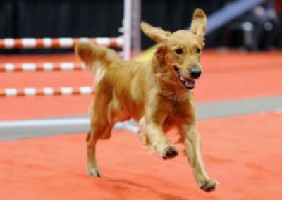 Leia running at Sportsmen Show 2012
