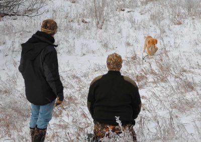 teaching-baby-puppy-to-retrieve